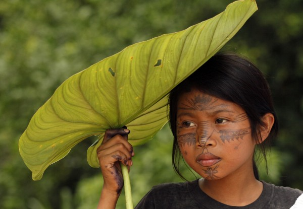 A Sarayaku Indian girl shades herself with a large leaf as she watches a celebration in the village of Sarayaku, Ecuador, Sunday, Aug. 12, 2012. The Sarayaku people are gathering to celebrate a ruling by the Inter-American Court of Human Rights in their favor, winning a 2003 lawsuit against oil activity on their ancestral Amazon lands. The court ruled that Ecuador's state violated the Sarayaku's property rights for not consulting them before signing an oil contract with the Argentine oil company Compania General de Combustibles (CGC) in 1996. The state must pay the Sarayaku $1.4 million dollars for property damage on communal land caused by oil exploration and for court costs. The company withdrew from Ecuador in 2011 after violent protests by the Sarayaku.