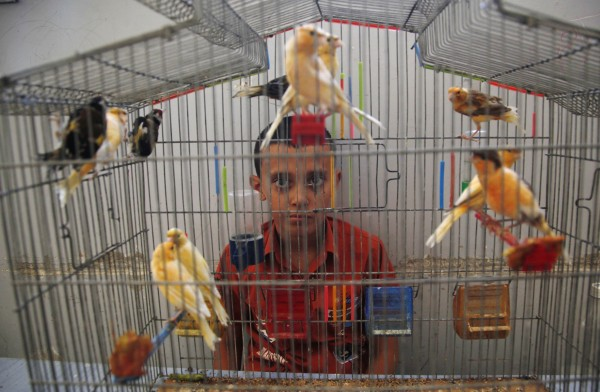 A Syrian boy looks on as he sits behind a bird cage in a school his family took refuge from the fighting in the town of Kafr Hamra, some six miles north of the center of  the Aleppo city, Syria on Tuesday, Aug. 7, 2012.