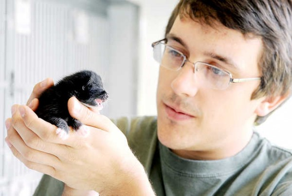Zachary Black, operations manager at the Greater Androscoggin Humane Society in Lewiston, holds a newborn kitten that was found in a Dumpster in Lewiston. The female will live with a mother cat with a young litter until she is old enough to adopt at 8 weeks old.