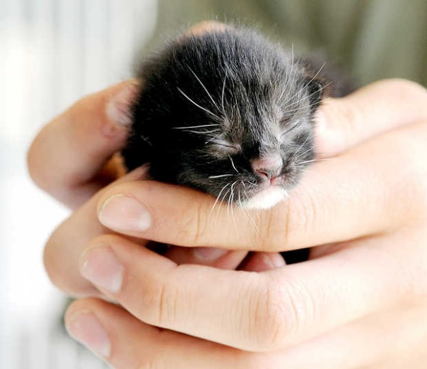 A female newborn kitten is one of four believed to have been thrown into a Dumpster in Lewiston.