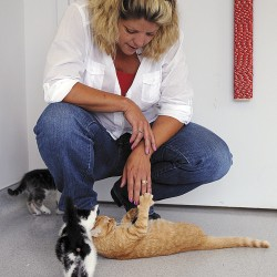 Bangor Humane Society Executive Director Suzan Bell plays with a frisky orange tiger kitten while two other kittens come over to see what is going on.