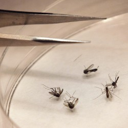 West Nile cases jump 40 percent in a week