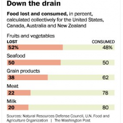 In U.S., food is wasted from farm to fork