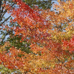 Fall foliage hits peak in southern half of Maine