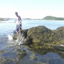 Bill pulls sustainability, legality of seaweed harvesting into spotlight