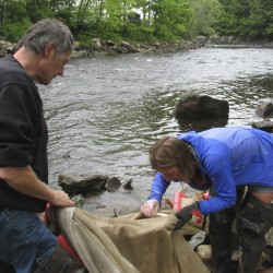 Maine Department of Marine Resources proposes 100 elver licenses for four Maine Indian tribes