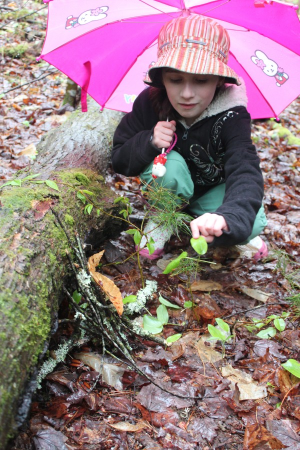 Third-grader Savannah Boislard builds a fairy house out of fallen leaves and twigs in the forest beside Brownville Elementary School on May 10, 2012, during the school's first &quotNature Trail Celebration Day.&quot