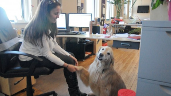 Kate Bachman, an employee of Broadreach Public Relations, with Zoe, one of the office's resident golden retrievers.