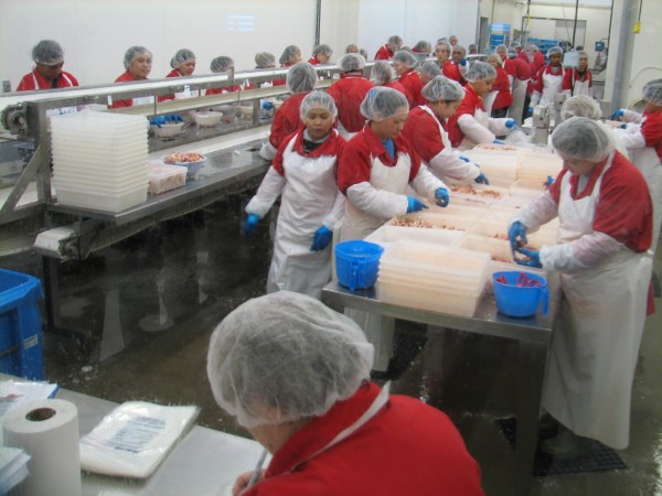 In this photo taken in June 6, 2012, dozens of workers — many of them Filipino — pick through cooked lobster meat at a Paturel processing plant in Deer Island, N.B. Paturel is the processing division of East Coast Seafood, which is partnering with Garbo Lobster to buy the former Stinson Seafood plant in the Gouldsboro village of Prospect Harbor.