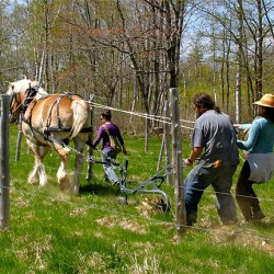 True Horsepower at Oyster River Winery and Vineyard in Thomaston.