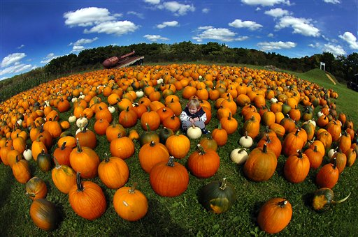 Alexander Snipes, 3, of Jessup, Pa., takes a break from walking through piles of pumpkins on Thursday, Sept. 20, 2012, at Ritter's Farm Market in Mount Cobb, Pa.