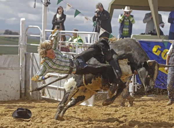 A South African rodeo cowboy is thrown from a  bull as he is riding in Malmesbury on the outskirts of  Cape Town, South Africa, Saturday, Sept  22, 2012. The second rodeo held in the Western Cape history based on the official rules from American Rodeo club's. Riders try to stay on the bull for up to eight seconds with points being given by officials with one  winner at end day.