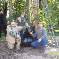 Bear attacks unusual, but not unknown