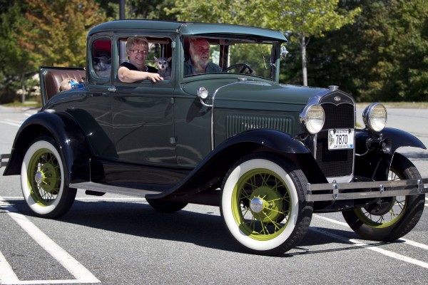 A lap dog rides in style in an antique car leaving Shaw's supermarket in Freeport.