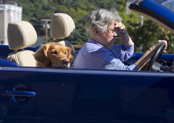 A golden retriever rides in convertible while passing through Freeport.