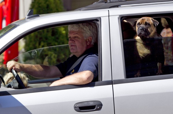 A driver and his dog watch shoppers while waiting in traffic in Freeport.
