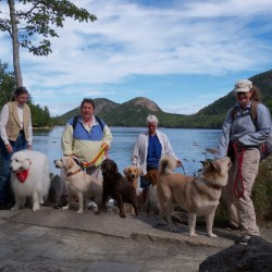 Downeast Dog Scouts - Jordan Pond - Acadia National Park