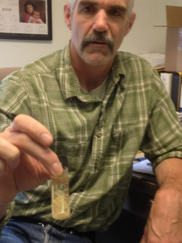 Lee Kantar, moose biologist for the Maine Department of Inland Fisheries and Wildlife, holds a vial containing lungworms found in a moose. Researchers have determined that the lungworms are not dictyocaulus viviparus, as previously thought, and may be worms that are more commonly found in red deer and fallow deer in Sweden.