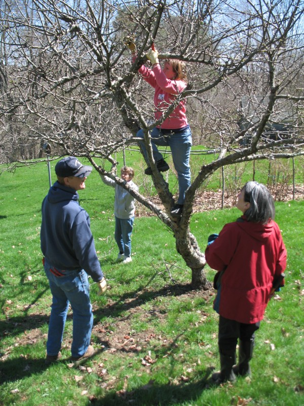 Master Gardeners at a hands-on pruning class.