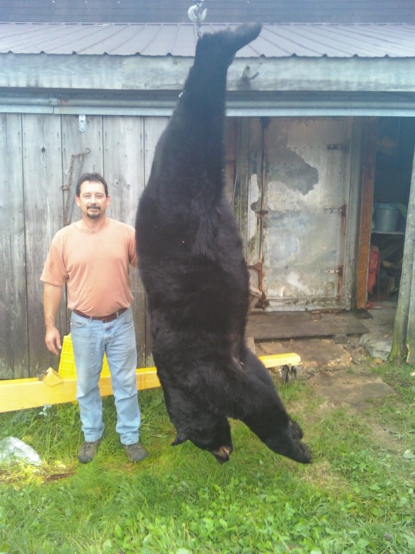 Jeff Hilton of Charleston bagged a 520-pound bear on Sept. 12.