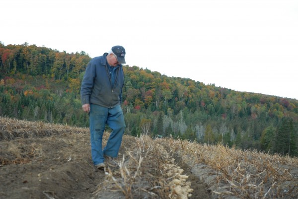 Raoul Caron inspects a row of recently dug potatoes on his family farm. Despite a dry summer and concerns over yields, Caron said this year's crop looks to be promising.
