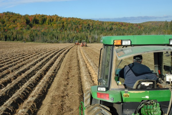 It started to rain in Aroostook County over the weekend, but all last week was sunny and dry as the annual potato harvest got under way.