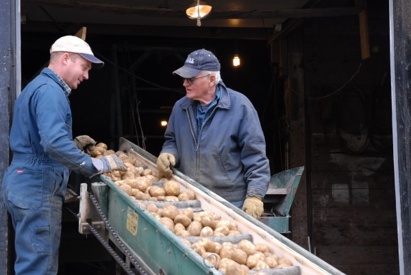 Two generations of Carons discuss this year's harvest and the quality of the potatoes as they are loaded into storage. Kris Malmborg (left) takes vacation time each year to work with his grandfather Raoul Caron on the family farm in Fort Kent.