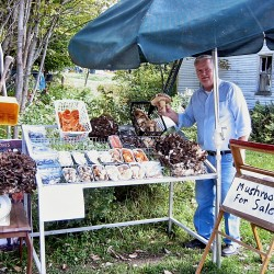 Mushroom Man (Herman Clark) Passed September 19th, 2012. His son now has taken over his mushroom weigh station that has been family run over 20 years!