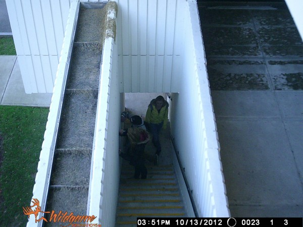 Surveillance image of two suspects and another person of interest tagging a building in Bangor.