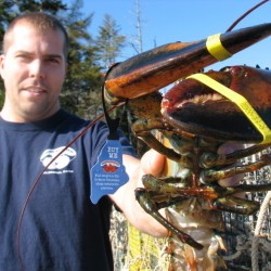 Sponsor tries to muster support for lagging lobster bycatch bill