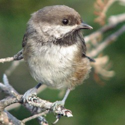 Maine Huts & Trails unveils self-guided bird walks