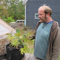 Amherst man pleads guilty to stealing medicinal marijuana