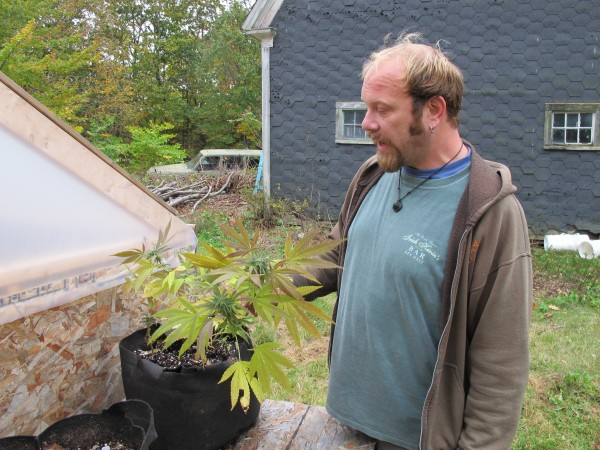 Thomas Davis, a licensed medical marijuana grower and caregiver, inspects his only remaining plant after his crop was burglarized Wednesday night. Police eventually recovered the stolen marijuana, and three days later returned it to Davis, who estimates about 85 percent of the crop was ruined by mold after it was stolen.