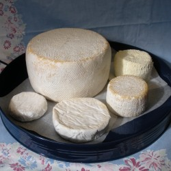 Lovers of raw milk cheese savor its unique flavors