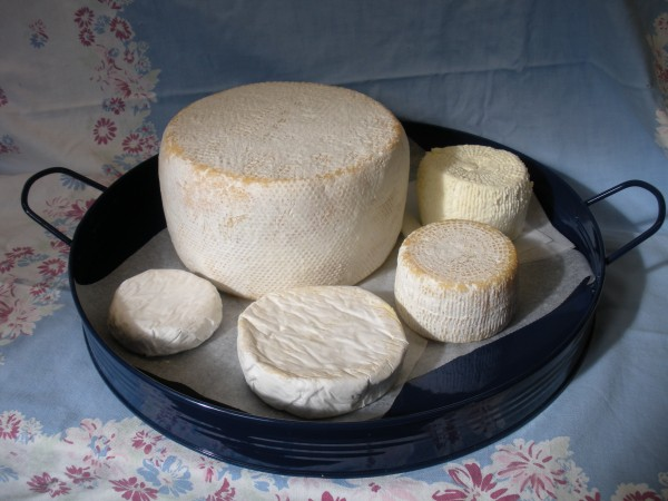 A selection of cheeses from Lakin's Gorges Cheese.