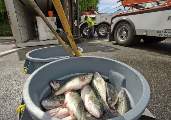 Tow rig operators hook up to a truck that overturned carrying 1,600 pounds of fish in Irvine, Calif., on Oct. 11, 2012.