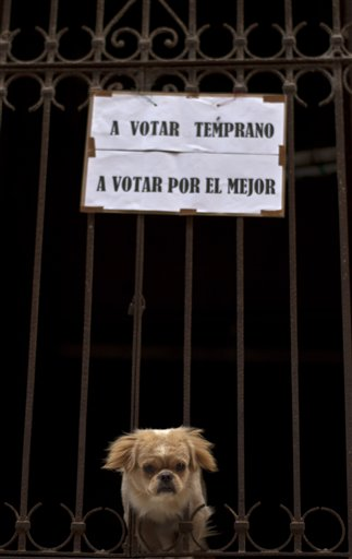 Under a sign that reads in Spanish &quotvote early, vote for the best,&quot  a dog peers through the fence of a house near a polling station in Havana on Sunday, Oct. 21, 2012. Cubans are going to the polls Sunday to vote in municipal elections.