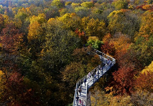 Visitors walk between trees bearing their autumnal colors during sunny weather at the Baumkronenpfad (treetop path) in the Hainich National Park near Bad Langensalza, central Germany on Sunday, Oct. 21, 2012. The treetop path is the only one of its kind in continental Europe and is a trail through the trees running at about 98 feet above ground.