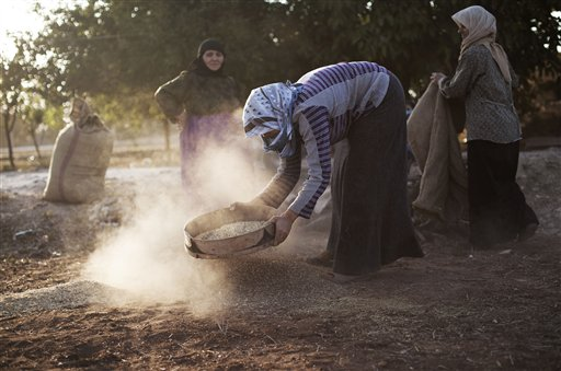 Syrian women work on their field in the village of Tarafat, Syria on Sunday, Oct. 14, 2012. The Aleppo rebellion started off in the rural areas of Aleppo province, not in the city as was the case in most other parts of Syria. Until this day, all of Aleppo's rebel-held areas are poor, while the city's affluent parts remain under government control with life there reportedly continuing much as it had before. Regime forces punish the city daily with artillery and airstrikes. Civilians are killed and wounded while standing on breadlines, walking the streets or watching television at home.