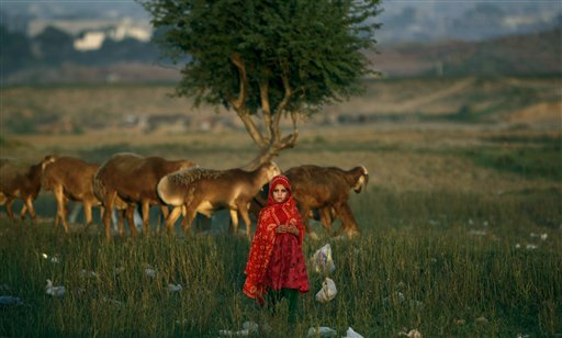 An Afghan refugee girl stands next to her family's sheep in a field next to a slum area on the outskirts of Islamabad, Pakistan on Monday, Oct. 1, 2012.
