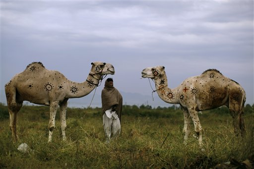Pakistani Faqir Zada, 31, stands next to his camels displayed for sale in preparation for the coming Muslim holiday of Eid al-Adha, or &quotFeast of Sacrifice,&quot on a roadside on the outskirts of Islamabad, Pakistan on Monday, Oct. 15, 2012. According to Faqir he painted the camels to make them beautiful and to attract customers.