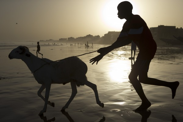 A boy chases a ram into the Atlantic Ocean as residents wash their sheep before sacrifice, in preparation for the Eid al-Adha feast in Dakar, Senegal, Friday, Oct. 26, 2012. The Eid al-Adha festival, known locally as Tabaski, celebrates Abraham's willingness to sacrifice his son.