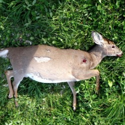 Milo man charged with shooting at deer in game preserve
