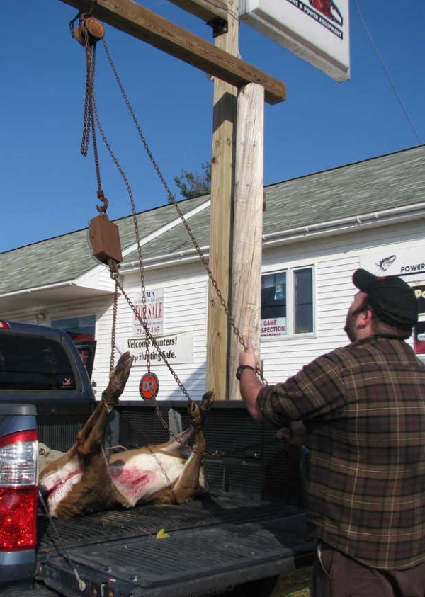 J&K Sporting Goods employee Mark Neary lifts a deer Saturday afternoon in West Paris to weigh it for hunter Paul Driscoll of Portland.