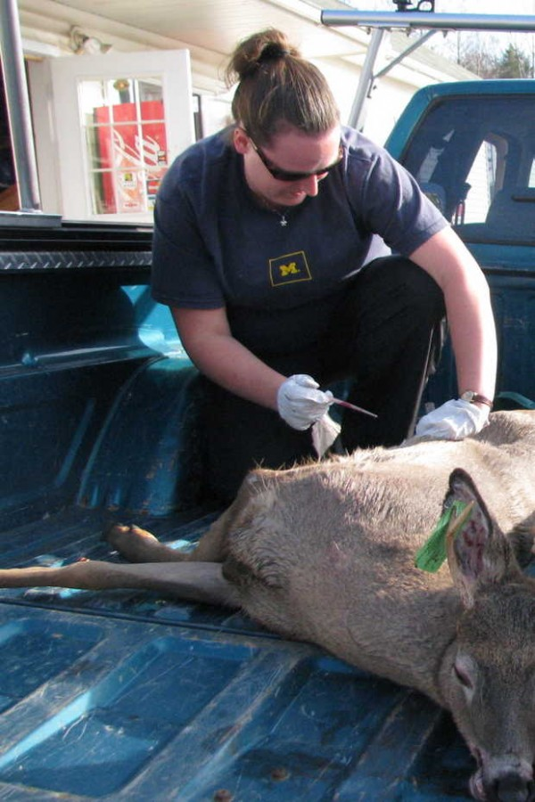 Sara Robinson, an epidemiologist with the Maine Center for Disease Control and Prevention in Augusta, draws blood from a buck brought into the J&K Sporting Goods game-tagging station in West Paris on Saturday. Robinson and epidemiologist Heidi Mallis of Lewiston were taking blood samples to test for eastern equine encephalitis.