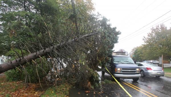 Traffic makes its way around a fallen evergreen tree on Burmont Rd. near School Lane in Drexel Hill, Delaware County, Pennsylvania, Monday, October 29, 2012.