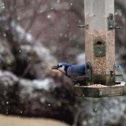 Maine wildlife weathers Hurricane Sandy