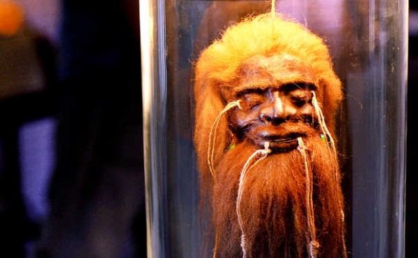 This fake Jivaroan shrunken head is made from the hide of a llama.
