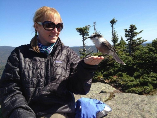 Holly Todd of Swanville feeds grey jays on Mount Lincoln in New Hampshire while hiking the Appalachian Trail in 2012 with her fiance Neil LeBlanc.