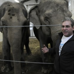 Elephants in Maine find a home in Hope